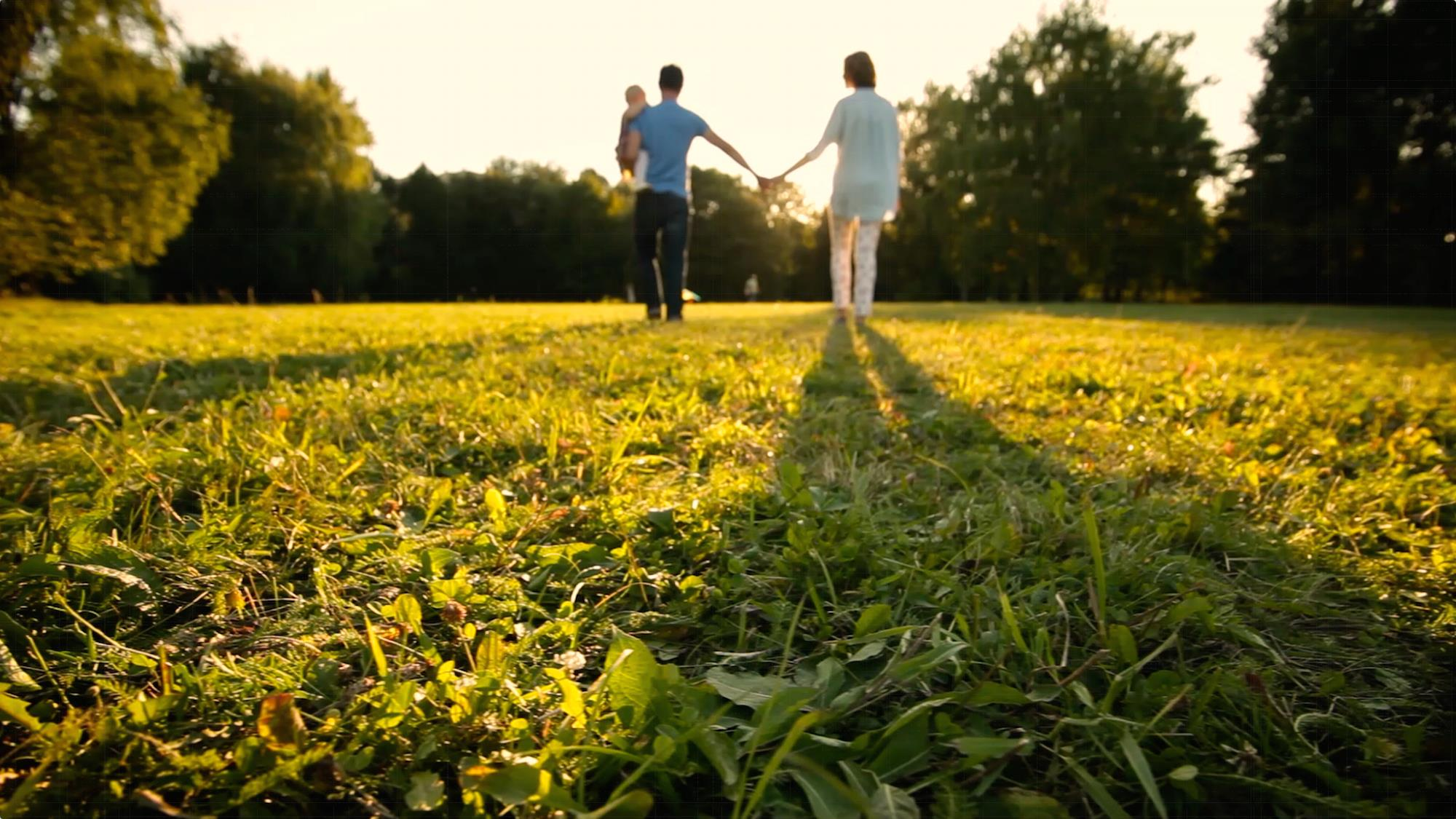 Family walking hand in hand in a meadow